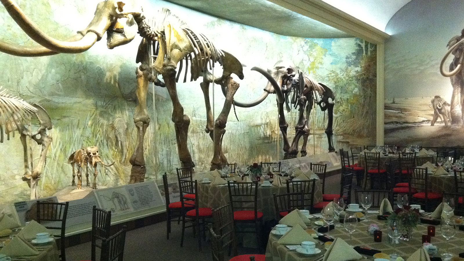 Morill Hall main room, mastodon skeleton.